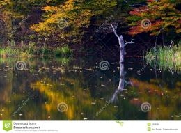 Peaceful lake coastline detail in Autumn with one tree protruding on 103