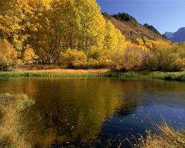 Peaceful Lake Forest Calm Golden Leaves hd wallpaper #192527 183
