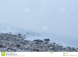 Rock Strewn Coastal Maine Beach In Heavy Fog Stock PhotoImage 1082