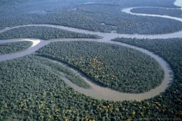 Aerial view of Amazon River, Amazon Jungle, Brazil, South America 755