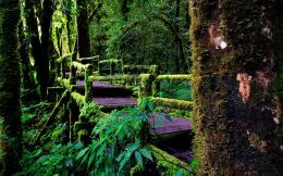 download rainforest bridge wallpaper tags wooden bridge rainforest 617