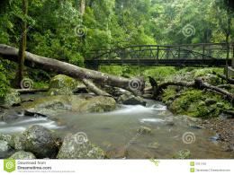 Rainforest Bridge Royalty Free Stock PhotosImage: 5701148 963