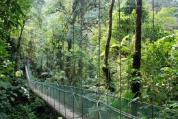 rainforest bridge JPG 1151