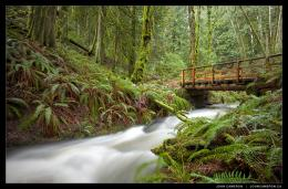 Creekside Rainforest Bridge 1090