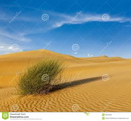 Dunes Of Thar Desert, Rajasthan, India Royalty Free Stock Images 1570