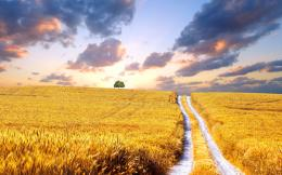 awesome wheat field landscape wallpapers download wheat fields hd 121