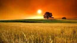 image description for wheat field sunset wallpaper wheat field 1247