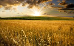 wheat field wallpaperForWallpaper com 1070