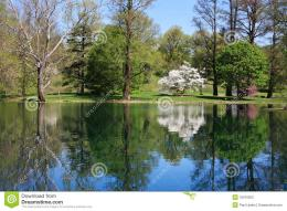 Symmetrical Reflection On A Quiet Pond During Springtime 1567