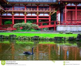 reflection in the pond of Byodo in temple in Hawaii with a black 1019