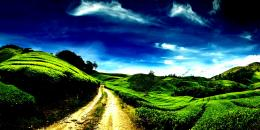 Beautiful green hills country road white:High Contrast 511