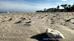 Palm Beach Rocks | Reef RescueCoral Reef Blog 1020