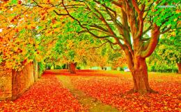 Vivid autumn colors Wallpaper 1161