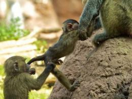 http:imagesci com cute baby spider monkeys 8824 hd wallpapers html 1773