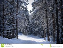 Swedish Winter Royalty Free Stock PhotoImage: 4460025 1874