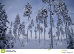 Swedish Winter Wonderland Royalty Free Stock ImagesImage: 23486839 596