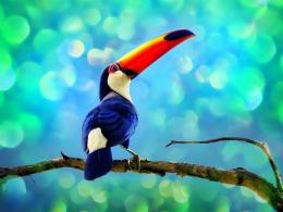 Toucan Bird HD Wallpaper | Toucan Pictures | Cool Wallpapers 1681