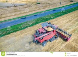 Aerial view on the combine working on the large wheat field 155