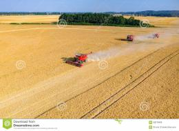 view on the combines and tractors working on the large wheat field 543