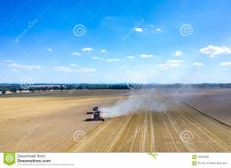 view on the combines and tractors working on the large wheat field 1501