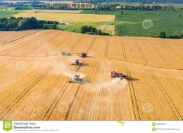 view on the combines and tractors working on the large wheat field 802