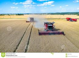 view on the combines and tractors working on the large wheat field 908