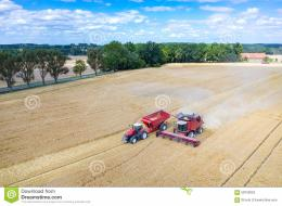 view on the combines and tractors working on the large wheat field 1771