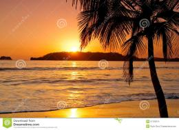 Sunset By A Palm Tree In A Beach Stock ImagesImage: 27193374 342