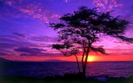 Download Tree silhouette in the purple sunset wallpaper 893