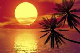 Sunset and palm tree 103