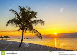 Beach With Palm Tree At Sunset Royalty Free Stock PhotoImage 533