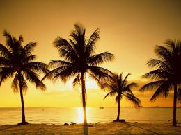 Beautiful Palm Tree Wallpapers20 HD Photos 916