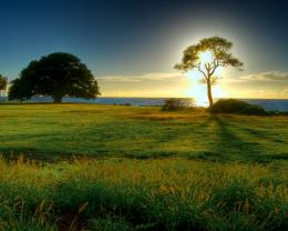 Download Tree on seashore in sunset wallpaper in Nature wallpapers 1720