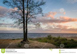 Tree On The Seashore Sunset View Stock PhotoImage: 55526107 1988