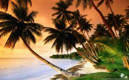beach palm trees on sunset jpg 1658