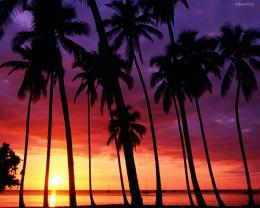 Palm Trees and Sunsets 1982