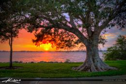 Fig Tree at Park During Sunset Vero Beach Florida Indian River C Add 1866