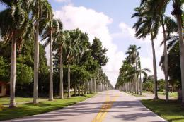 tree lined road, Cuban Palm trees planted in 1880s, McCregor blvd8 170