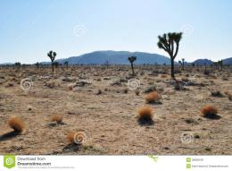 Joshua Tree National Park, The Boulevard of Trees 1552