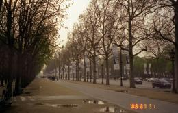 05 02 Beautiful road trees in perspective of Champse Elysees Boulevard 305