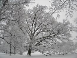File:Frosty trees in winter wonderland Helsinki 6 JPG 596