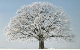 realise there\'s something incredibly honest about trees in winter 1220