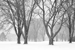 Winter Trees, 2011 | Fine Art 1327