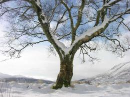when we look at trees in winter we think of them as dormant but they 359