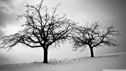 Trees In Winter wallpaper1041481 669