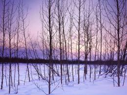 Winter TreesWinter Wallpaper509497Fanpop 842