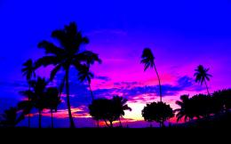 Summer twilight sky palms nature sunsets:High Contrast 978