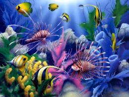 life color underwater coral reef ocean sea sunlight wallpaper 1641