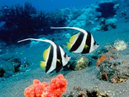 Underwater Life Wallpapers 1373