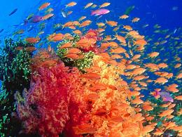 is some of the marine animals and enjoy the beauty of marine life 138